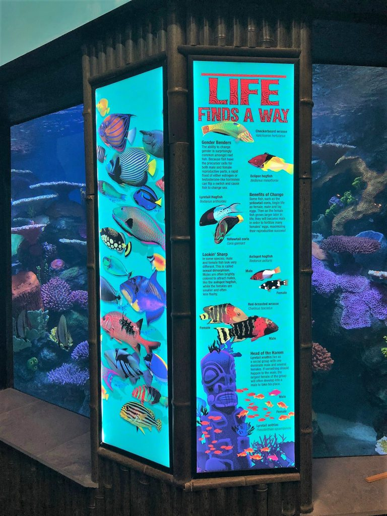 ARC and Tulsa Acquarium Wall Graphics