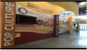 Environmental graphics at the exhibit pictured below delight and educate visitors about pig and beef farming